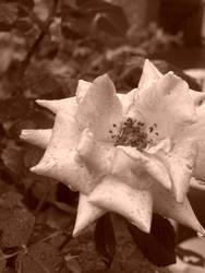 La Fleur. by AveryARSENIC