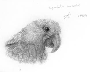 Hyacinth Macaw by ShadowstrikeArtists