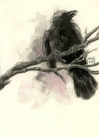 Violet Crow by emera