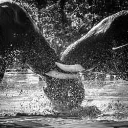 Elephants' Game by tholang