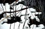 Yesterdays New Fallen Snow On January 12  by eskile