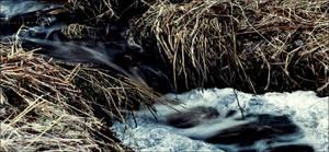 A Frozen Source Of Water January 16 In Archipelago by eskile