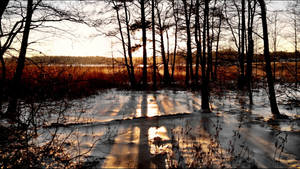 January 9th Is So Warm That The Ice Is Melting    by eskile
