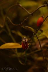 Fall by IsabelleAndreea