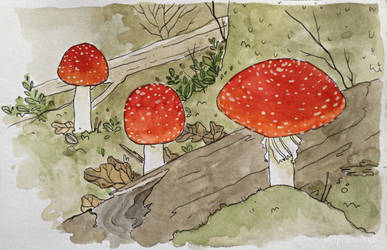 Fly Agarics by oldpinewoods