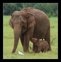 Kaudulla Elephants III by tenetsi