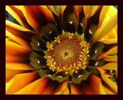 kaliedescopic flower by ariseandrejoice