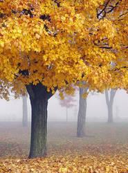 Misty Maples II by ariseandrejoice