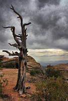 Mount Lemmon II by ariseandrejoice