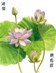 Tao Lotuses by laurenmegan-art