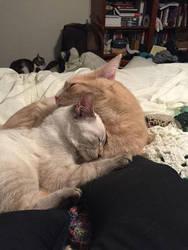 Sleepy cuddles by RacktheJipper