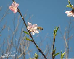 Spring by zulu-zlo