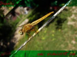 Dragonfly by zulu-zlo