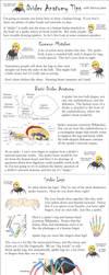 Drider Anatomy Tips by phantom-inker