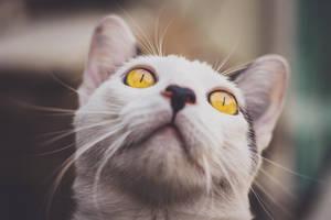 Cat eyes by CeroArt