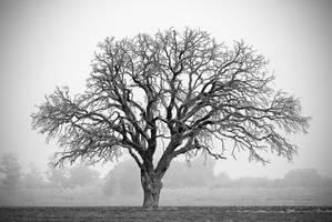 Autumn Tree by enunez