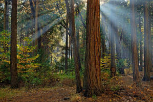 Morning Light Beams by enunez
