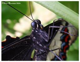 Butterfly Macro by BreeSpawn