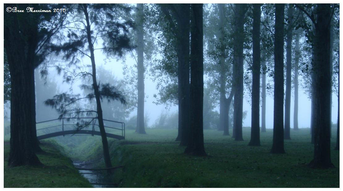 Forest Morning by BreeSpawn