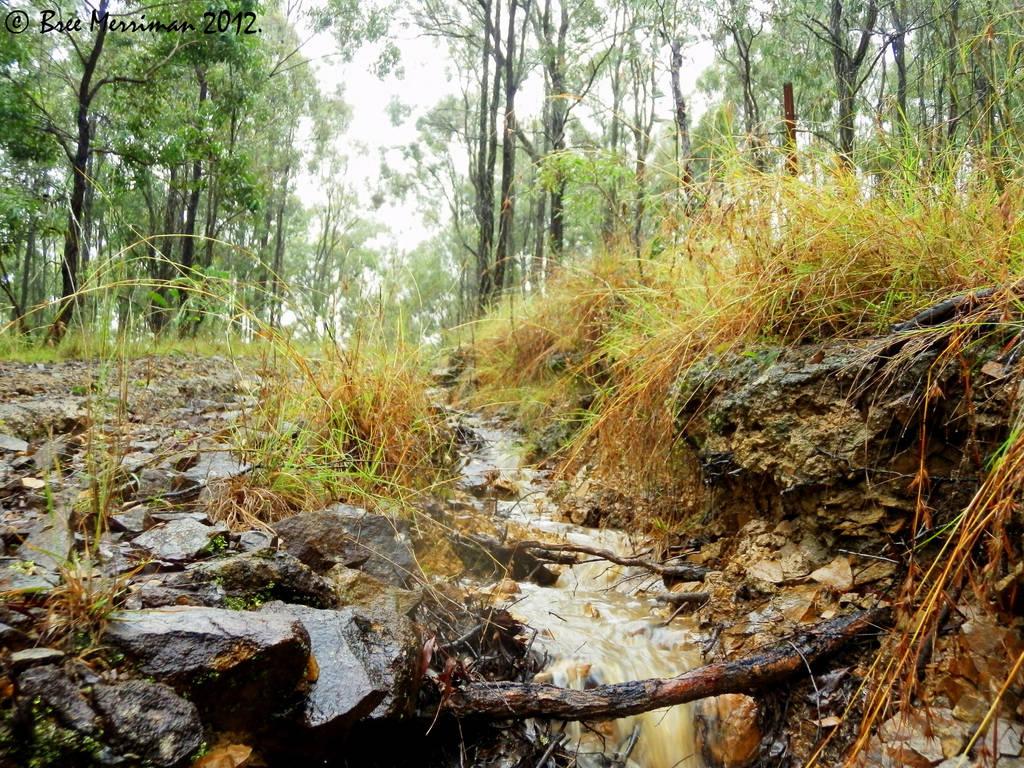 Raining Runoff by BreeSpawn