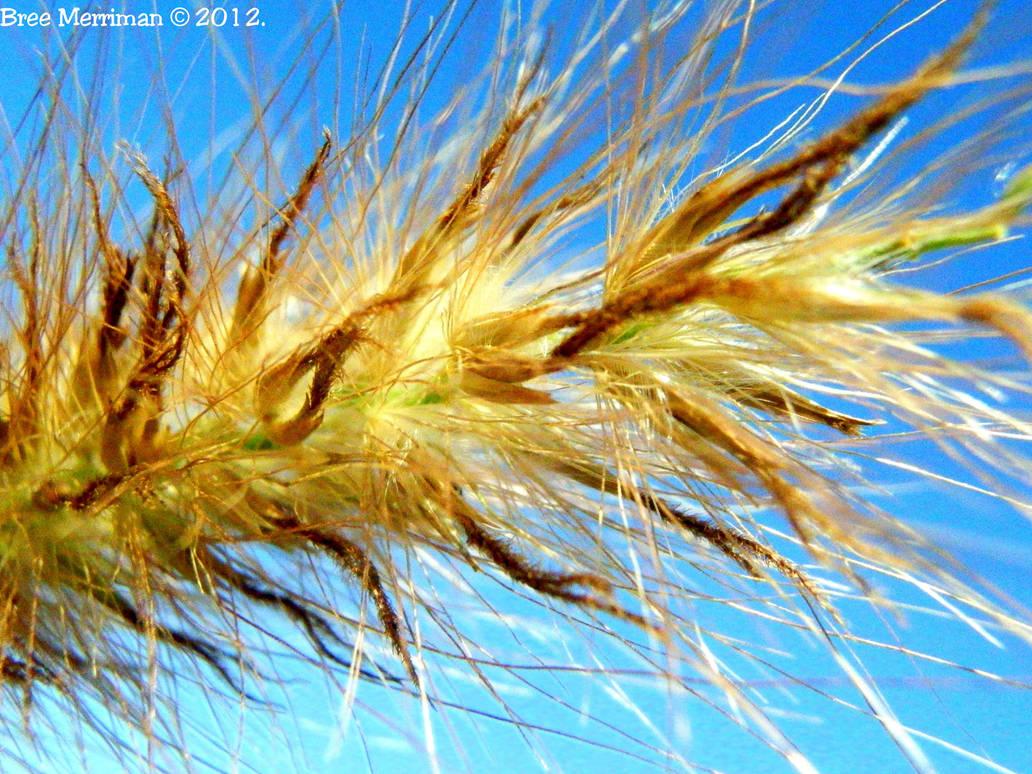 Golden Grass by BreeSpawn