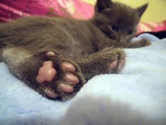 polydactyl Kitten Feet by ainagami