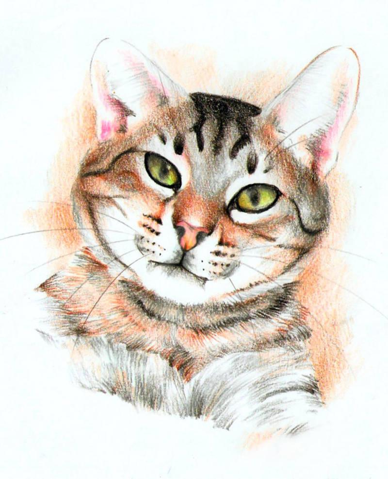 Big Fat Tiger By Pixelraccoon On Deviantart