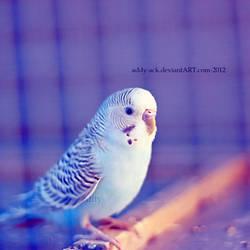 Birdy.. by addy-ack