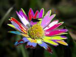 Flower power by Burtn