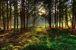 Following The Sunlight by Burtn