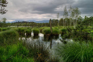 The Marshes by Burtn