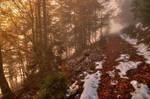 Foggy Autumn Forest by Burtn