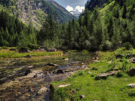 Calm Wilderness by Burtn