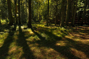 Deep Sunny Forest by Burtn