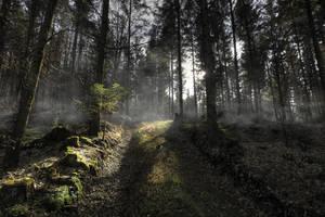 Spooky Autumn Forest Background by Burtn