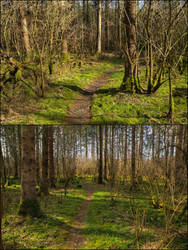 2x Spring Forest Background by Burtn