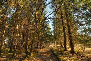 Forest Path by Burtn