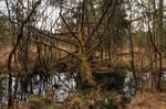 Swampy by Burtn