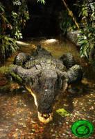 The Greedy Crocodile 03 by Idraemir