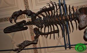 Allosaurus 02 by Idraemir
