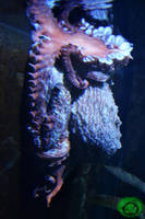 The Shy Octopus by Idraemir