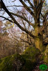 Rag Tree - Arbre  Loques 02 by Idraemir