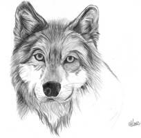 Mais um cachorro... by Anninhabs