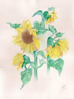 Watercolor by Anninhabs