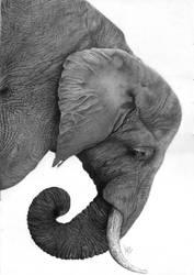 Elephant by Anninhabs