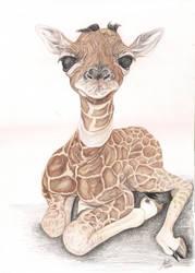 Baby giraffe by Anninhabs