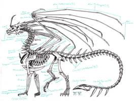 Zha Skeleton Anatomy by Zhantilniiraala