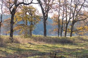 Woods1 by Sorrelstang-stock