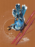 Beautiful Blue Jay by koel-art