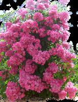 Flowered garden png 04 by HermitCrabStock